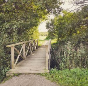 En bro av trä i skogen