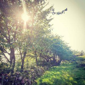 Solen skiner genom träd vid en stenmur